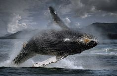 Where To Go Whale Watching In The Polar Regions