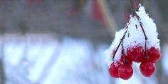 Fruit, Winter, Food, December 12, Winter Time, Essen, Meals, Yemek, Winter Fashion