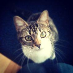 【#Fay #Cat en pleine observation... de son paquet de croquettes :D】  artsdream@Instagram
