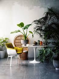 House plants & wicker chair
