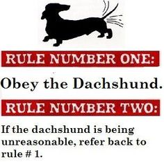 Obey the Dachshunds