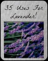 A Blessed and Blissful Life: 35 Uses For Lovely Lavender!