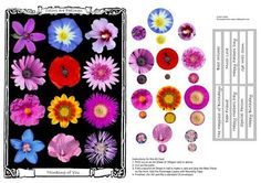 Coloured Flowers on Craftsuprint designed by Dan Coker - This striking Topper with Decoupage elements, Sentiments and Occasions suits being placed on the front of an A5 card (A4 folded in half). Will fit a standard C5 envelope. - Now available for download!