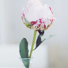 #theinstaretreat #theinstaretreaters #flower #happiness #love #beautiful