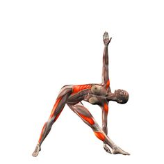 Left triangle pose - Trikonasana left - Yoga Poses | YOGA.com