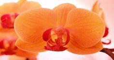 Storczyki pomarańczowe i pomarańczowo-żółte