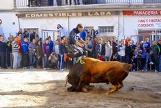 torodigital: La Peña Mil Duros exhibe sus astados en Castellno...