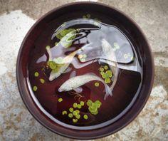 Incredible 3D Fish Paintings in Resin