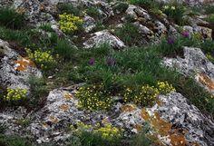 Kudy z nudy - Kočičí skála u Mikulova Stepping Stones, Outdoor Decor, Plants, Flora, Plant, Planting
