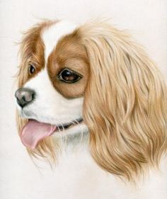 """Cavalier King Charles Spaniel by Heather Mitchell by Heather A. Mitchell Colored Pencil ~ 14"""" x 11"""""""