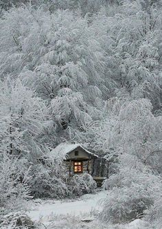 Nothing like a frozen rustic cabin in the woods!