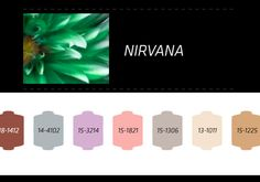 Nilit S/S 2014, nirvana trend color