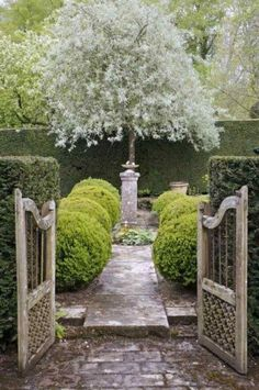 Olive tree and boxwood topiary balls