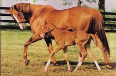 Did you know Genuine Risk was bred to Triple Crown winner Secretariat in 1982. The resulting foal expected in 1983 would have made history as the first offspring of two Kentucky Derby winners. Genuine Risk, however, delivered a stillborn colt. Though scheduled to be bred to Nijinsky II in 1983, she was rebred to Secretariat without success.