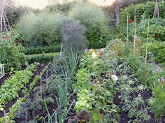 Charlie McCormick takes a modern approach to a traditional English country garden.