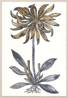 Historical Botanical 3 | Natural Curiosities