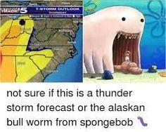 Alaskan Bull Worm