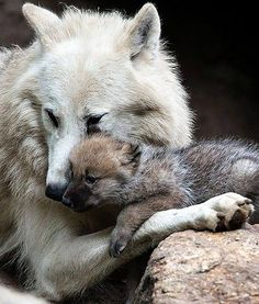 Mama and puppy! Cutest thing I ever seen!
