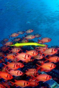 Under the sea ✩✩coral✩reef✩fish✩✩ Life Under The Sea, Under The Ocean, Sea And Ocean, Underwater Creatures, Underwater Life, Ocean Creatures, Fauna Marina, Beautiful Sea Creatures, Beneath The Sea