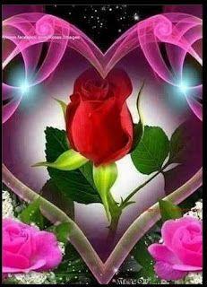 Love Wallpapers Romantic, Beautiful Flowers Wallpapers, Beautiful Rose Flowers, Pink Rose Flower, Romantic Flowers, Beautiful Nature Pictures, Romantic Pictures, Beautiful Gif, Rose Flower Wallpaper