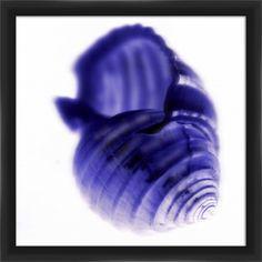 X-Ray Shells II Framed Graphic Art