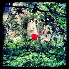 Urbino -Cortile del Palazzo  Ducale -Photo by sonia18970