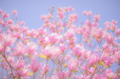 Camera: Nikon D3s Lens: Carl Zeiss Planar T* 1.4/50 ZF.2 Location: Tsurumi Ryokuchi park, Osaka, Japan 春は刹那に過ぎ去って もうすっかり夏の陽気に… *'Setsuna' is a word for ephemeral. https://www.picturedashboard.com