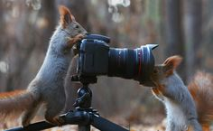 Squirrel Photographers By Vadim Trunov