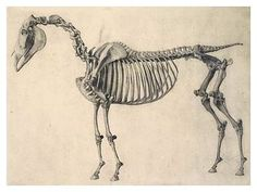 Skeleton of a Horse (from The Anatomy of A Horse)- George Stubbs (engraving, 1766)