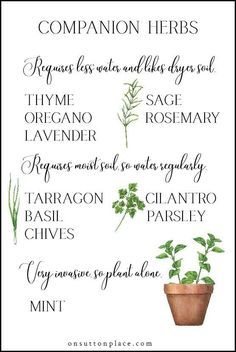 5 simple tips for successfully growing herbs in containers Includes a list of herbs that can be planted together ways to use herbs in your everyday life herbs growingherbs listofherbs - Container Herb Garden, Garden Plants, Herb Planters, Herb Pots, Herb Garden Indoor, Balcony Herb Gardens, Raised Herb Garden, Herb Garden Planter, Small Herb Gardens