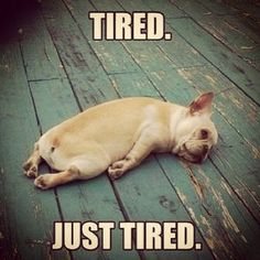 Are you assuming that your body is feeling tiredness or laziness and searching for a tired memes for fun? Here we have funny tired memes that will help you out when you cannot say the words. Funny Shit, Tired Funny, Crazy Funny, Funny Life, Funny Dogs, Funny Animals, Cute Animals, Tired Animals, Animal Memes