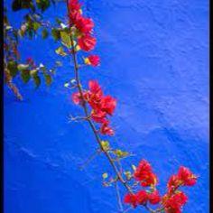 Majorelle Gardens Marrakech - most incredible blue