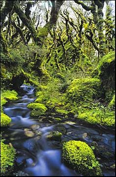 New Zealand Beech Forest - Routeburn Track