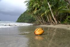 Coconut (actually a young one called a jelly) - Dominica
