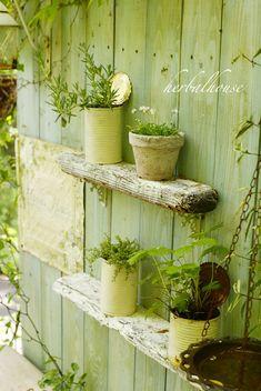 流木で作った小さな棚に小さな花を飾ろうと、 めちゃくちゃ小さなデイジーとか、 姫フウロソウとかを植え...