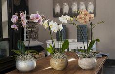 """Orchideát venni nem jelent nagy kihívást. Sokkal nagyobb feladat a csodás növény megfelelő ápolása, életben tartása, """"újravirágoztatása"""". 9 alapszabály orchidearajongóknak. Ideas Para Fiestas, Pure Beauty, Glass Vase, Planters, Pure Products, Diy, Home Decor, Architecture, Wedding Book"""