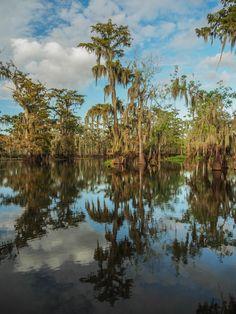 Cypress trees on Lake Martin in Louisiana [OC][1728x2304]