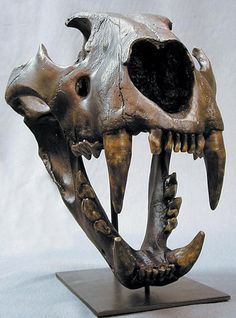 lion skull - Google Search