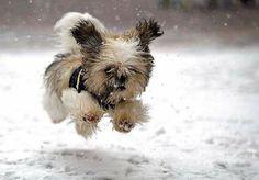 perro en la nieve corriendo