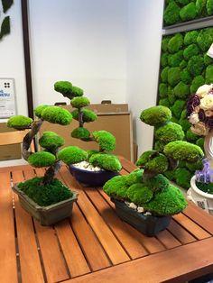 Moss Wall, Moss Garden, Green Art, Restaurant Design, Bonsai, Gardening, Landscape, Flowers, Plants