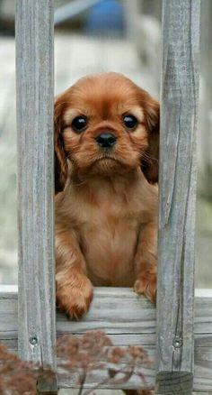 Puppy aan hekken