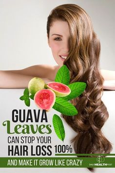 Guava: a sweet exotic fruit native to Mexico, Central and South America. Guava leaves can be used to reverse hair loss and promote hair growth. Oil For Hair Loss, Stop Hair Loss, Prevent Hair Loss, Guava Leaves, Reverse Hair Loss, Hair Loss Shampoo, Hair Loss Women, Hair Loss Remedies, Hair Loss Treatment