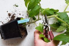 Garden Plants, Indoor Plants, Growing Gardens, Urban Farming, Outdoor Gardens, Garden Design, Planters, Herbs, Vegetables