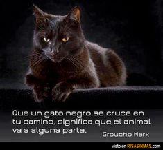 Que un gato negro se cruce en tu camino, significa que el animal va a alguna parte. Groucho Marx.