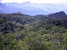 Estudo aponta aumento na área remanescente de Mata Atlântica em Minas Gerais   FarolCom