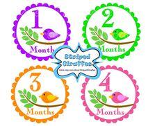 Bird Monthly Onesie Stickers Print at Home Pink Baby Girl Milestone Stickers Baby Shower Gifts New Baby Printable Digital Newborn