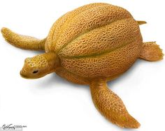 Cantaloupe Turtle. For more images of animals morphed into fruits and vegetables, go to http://www.impactlab.net/2009/08/09/great-morphed-photos-by-computer-whizkids/