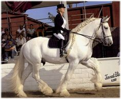 A Riding Shire - such power and elegance. #horse #gifts http://www.annabelchaffer.com/categories/Equestrian-Gifts/