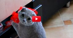 I Can't Stop Laughing. This Cat Thinks He's Super Sneaky — Just Watch What He Does When He Gets Caught. Hilarious! | The Animal Rescue Site Blog