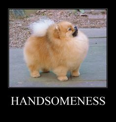 Handsomeness